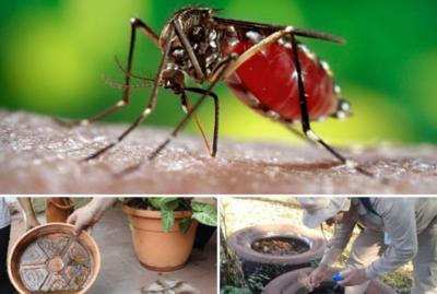 Aumentan los casos de dengue en Capital y Central