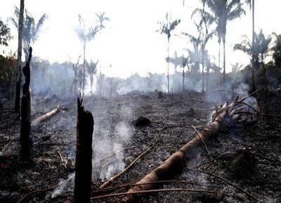 Deforestación de la Amazonía brasileña aumenta más del doble en un año