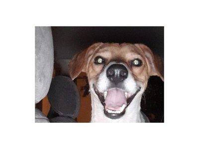 """Perro """"peregrinó"""" hasta Caacupé"""