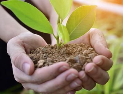 Plantan 100 árboles como cierre del centenario de amistad entre Paraguay-Japón