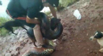 El dramático rescate a un perro atrapado en la boca de una anaconda