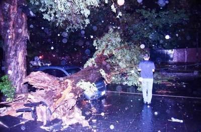 Motociclista muere aplastado por un árbol sobre Mcal. López, en Asunción •