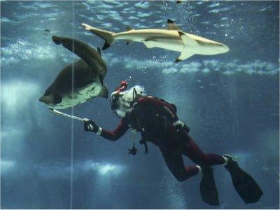 Un Papá Noel buzo alimenta tiburones en Río de Janeiro