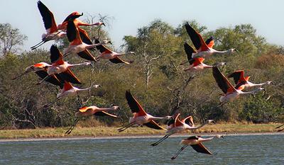 Paraguay será sede de la Feria de Aves de Sudamérica en el 2022