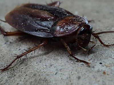 Salvan la vida a una cucaracha en Rusia