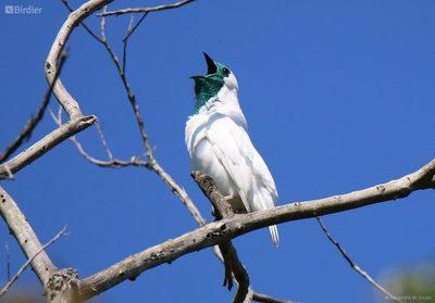 Asunción será sede internacional del festival de aves