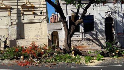 Sancionarán a quienes poden árboles sin permiso de la Municipalidad