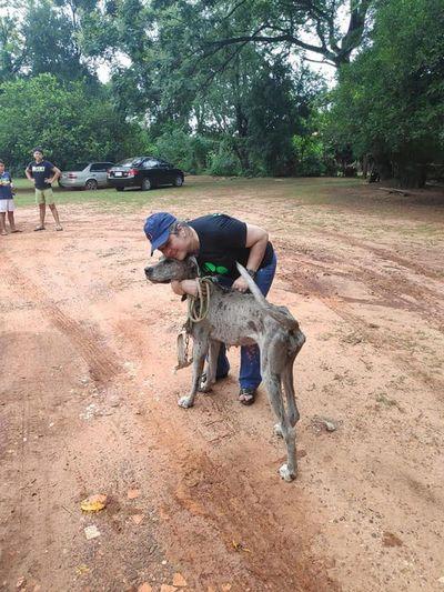 Allanan criadero clandestino y rescatan 22 perros en pésimo estado