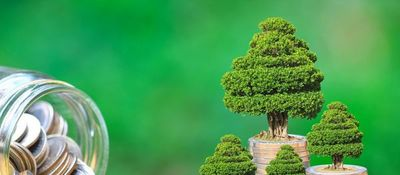 Bonos Verdes 2019, un año extraordinario
