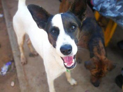 Invitan a pasar el Año Nuevo compartiendo con perros refugiados