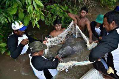 China prohíbe la pesca en el Yangtsé, tercer río más largo del mundo