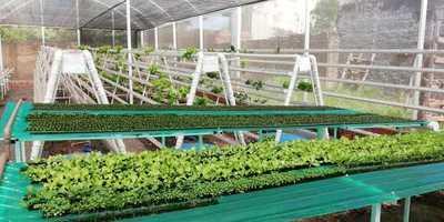 Joven emprendedora surte de verduras hidropónicas a la ciudad