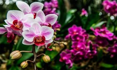 Taiwan apoyará a Paraguay en la producción masiva de orquídeas