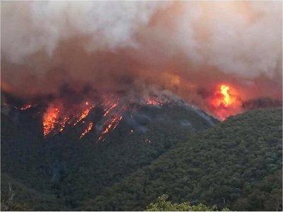 Unos 480 millones de animales víctimas por incendios en Australia