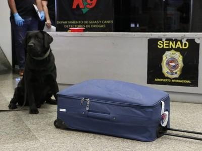 Can antidrogas detectó una maleta cargada con estupefacientes en el Silvio Pettirossi