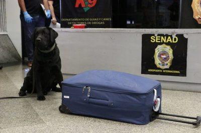 Can antidrogas advierte carga de cocaína en aeropuerto