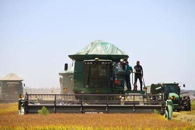 Presidente ratifica apuesta al sector productivo durante inicio de cosecha de arroz