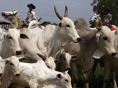 Senacsa suspende pago de anticipo  por venta de ganado