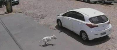 Final feliz para el perro de dos patas que fue abandonado