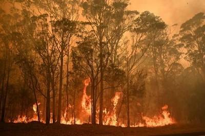 Suben a 26 los muertos por los incendios forestales en Australia