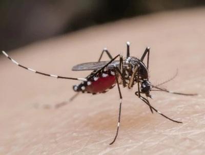 Serotipo 4 de dengue podría provocar cuadros más graves en personas que ya padecieron la enfermedad