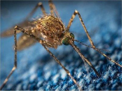 Congreso busca instar al Ejecutivo a declarar emergencia por dengue