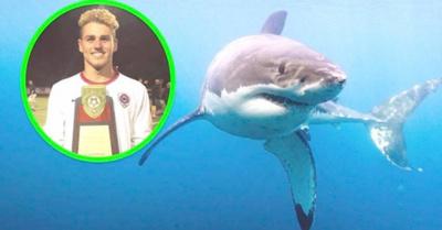 """Futbolista fue """"tragado"""" por tiburón en Australia"""