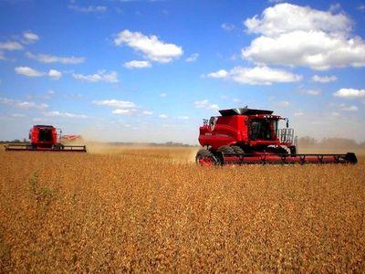 Argentina compraría el 70% del grano local en este 2020, señalan