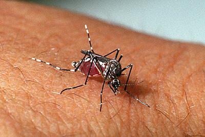 Declaran emergencia sanitaria por dengue en Central