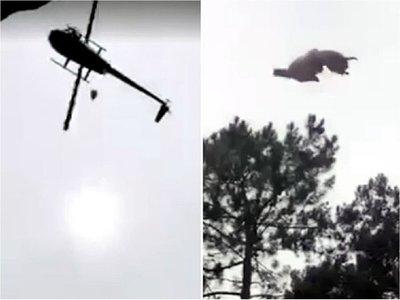 Uruguay: Lanzan animal desde un helicóptero a una piscina