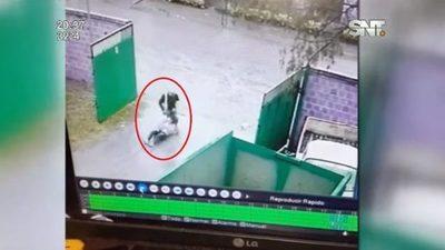 Motochorro arrastra a mujer para sacarle sus pertenencias
