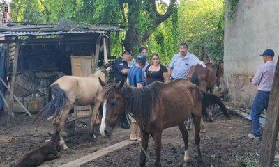 ¡Piel y hueso! Rescatan caballo en último grado de desnutrición