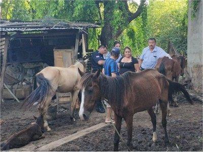 Rescatan cuatro caballos en pésimo estado de salud