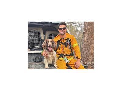 Una perra ayuda a rescatar a koalas en incendios de Australia