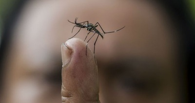 Reposos por dengue deben ser comunicados dentro de los tres primeros días al empleador