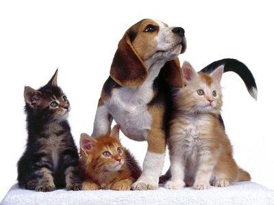 Tips para el cuidado de tu mascota en verano
