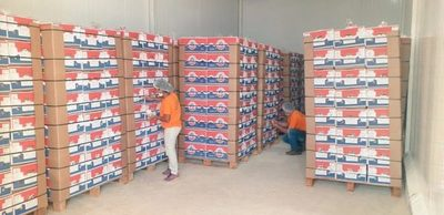 Paraguay concreta su primer envío de banana a Chile