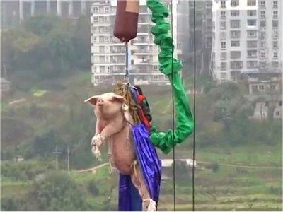 Arrojan cerdo vestido de superhéroe en un parque de diversión en China