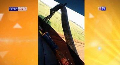 Sorpresita: Kurijú en parabrisas de camión