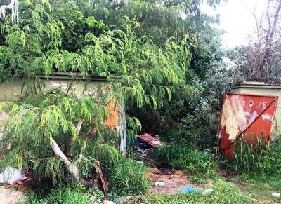 """Una """"selva"""" en pleno Cuarto Barrio •"""