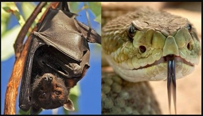El coronavirus que preocupa al mundo pudo haberse originado en murciélagos o serpientes
