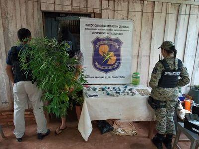 Policía decomisa marihuana picada en Horqueta