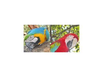 Nuevo robo  de papagayos  de su jaula en  Zoo de Asunción