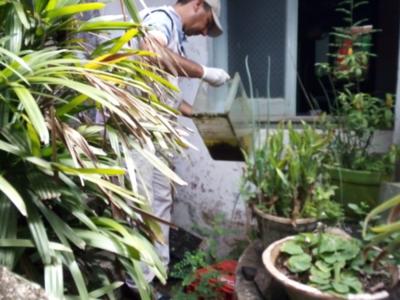 Dengue: Lamentan que campañas de prevención no impactan en la conciencia ciudadana