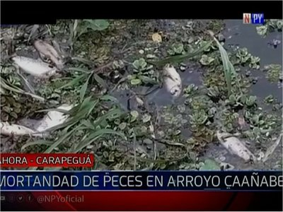 Registran mortandad de peces en Carapeguá