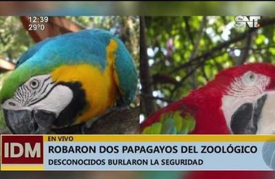 Robaron dos papagayos del Zoológico de Asunción
