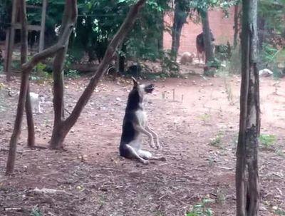 Perro murió tras ser colgado de un árbol por su dueño