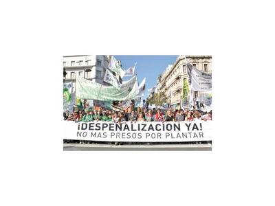 Argentina estudia despenalizar consumo y cultivo de cannabis