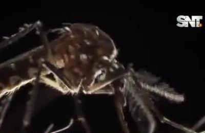 Alerta epidemiológica: Cuatro muertos por dengue
