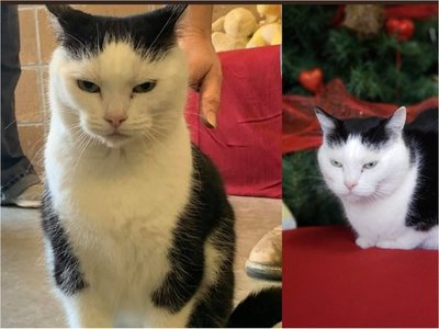 """Perdita, """"la peor gata del mundo"""", en busca de un hogar"""
